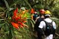 Parque Estadual Turístico do Alto Ribeira, PETAR - Andre Daffara 03.jpg