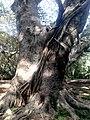 Parque do Ibirapuera - SP 3.jpg