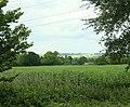 Pasture near Kington Langley - geograph.org.uk - 1399323.jpg