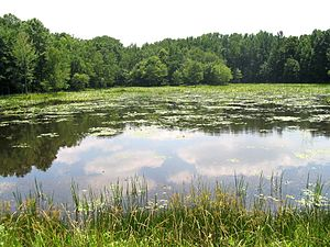 Patuxent River - The Patuxent Wildlife Research Center.