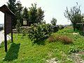 Pecetto di Valenza-orto botanico.jpg