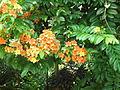 Penang Botanic Gardens (24).JPG