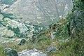 Peru-145 (2217938761).jpg