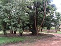 Photo taken by Rahul Ingle, May 2012 (7205626980).jpg
