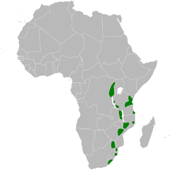 Phyllastrephus flavostriatus distribution map.png