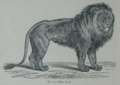 Picture Natural History - No 1 - The Lion.png