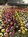 PikiWiki Israel 42557 Clay flower display.jpg