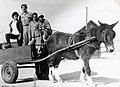 PikiWiki Israel 65451 a mule-drawn wagon.jpg