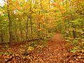 Pine Trail - Flickr - treegrow (1).jpg