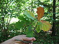 Plant 27 (6990370697).jpg