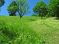 Plin de verde - panoramio.jpg