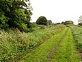Pocklington Canal Towpath - geograph.org.uk - 573855.jpg