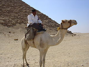 Egyptian National Police - Image: Police on a camel in front of the Red Pyramid in Dahshur