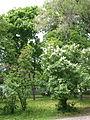 Poltava Petrovskiy Park 2014 (01).jpg