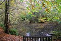 Pond in Fore Wood - geograph.org.uk - 1577197.jpg