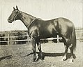 Poseidon 1906 VRC Melbourne Cup Owner Sir Hugh Denison Randwick Trainer Isaac Earnshaw.jpg