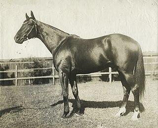 Poseidon (horse) Australian-bred Thoroughbred racehorse