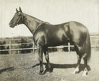 Victoria Derby - Image: Poseidon 1906 VRC Melbourne Cup Owner Sir Hugh Denison Randwick Trainer Isaac Earnshaw