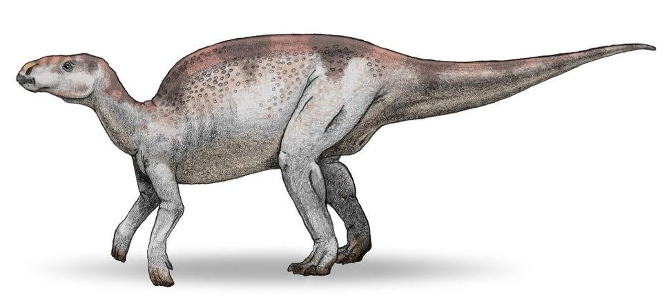Probactrosaurus v3