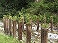 Protection perte de la Veveyse à Vevey - 11.jpg
