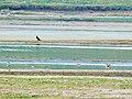 Ptice na Vlasinskom jezeru.jpg