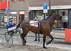 Purmerend Pferderennen 2014.jpg