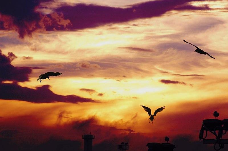 File:Purple sky.jpg