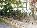 Putrajaya's Botanical Garden 10.jpg