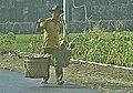 RIPrambananPlateau4.jpg