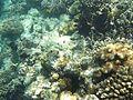 Rafa koralowa hurgada (8).JPG