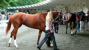 Rags to Riches (horse) - Image: Rags to Riches