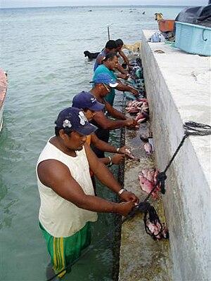 Raroia - Image: Raroia fishermen