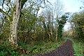 Rea's Wood, Antrim (4) - geograph.org.uk - 614998.jpg