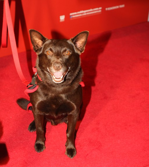 Red Dog (6216762636) red carpet pets