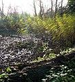 Reeds in November sunshine - geograph.org.uk - 1053605.jpg