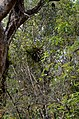 Rema-Kalenga Wildlif Sanctuary 5.jpg