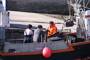 Retour de la pêche à la seiche du fileyeur Jason IV (20).JPG