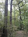 Rezerwat przyrody Dęby w Meszczach 12.13.jpg