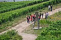 Rheingau-Taunus-Kreis - A Path through the Vineyards - geo.hlipp.de - 27275.jpg