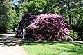 Rhododendronpark Bremen 20090513 157.JPG