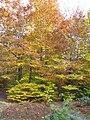 Ricketts Glen State Park Doug foilage.jpg