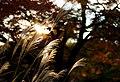 Rikugi-en Gardens, Tokyo; November 2012 (02).jpg