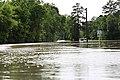 Roman Forest Flood - 4-18-16 (26446111341).jpg