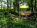 Roman road alongside Nine Acre Wood - geograph.org.uk - 1306703.jpg