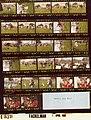 Rosalynn Carter - Easter Egg Roll on South Lawn - DPLA - f9f4416bd8df873803d7772cc5f747cf.jpg