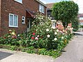 Roses on mid-Summer Day - geograph.org.uk - 1363788.jpg