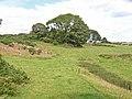 Rough pasture near Brynrefail - geograph.org.uk - 226630.jpg
