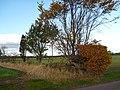Rural East Lothian , A Field Boundary near Markle Mains - geograph.org.uk - 2130655.jpg
