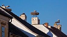 Rust neusiedlersee störche  Rust (Burgenland) – Wikipedia