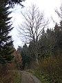 Rymanów-Zdrój - panoramio (14).jpg